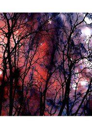Weston Scarves Plum Agate Silk Scarf - Forest
